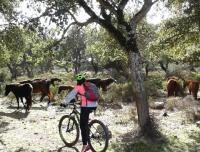 Settimana in bici